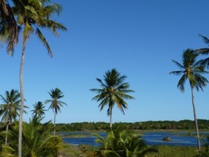 Palmen an einer Lagune