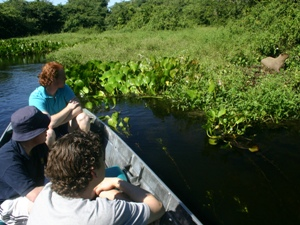 Tierbeobachtung vom Kanu aus