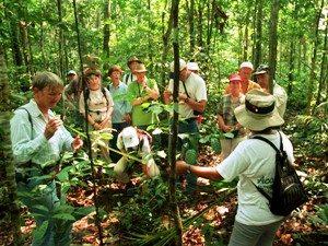 Brasilien Rundreise günstig Amazonas-Tour