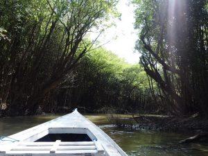 Im Amazonas ist das Klima das ganze Jahr über warm und feucht