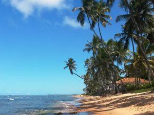 An der Nordostküste kann man an Palmenstränden entspannen