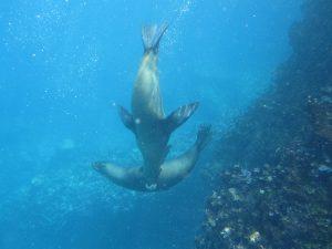 2010-02-28 Ecuador Galapagos onderwater 019