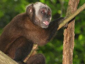 Puerto Maldonado - aap jungle