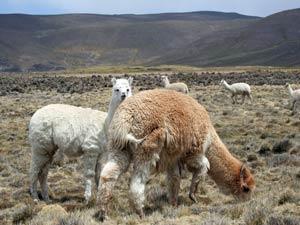 Peru reis - Andes