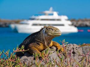 Galapagos rondreis