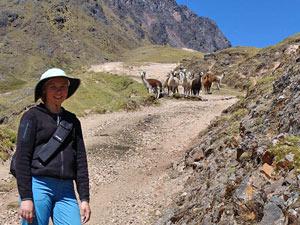 Lares trekking alpaca's