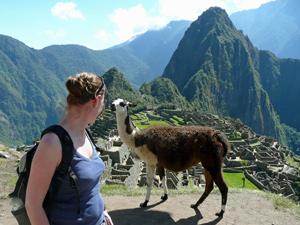 Machu Picchu lama - Peru compleet