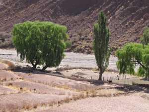 Reis van Potosi naar Uyuni