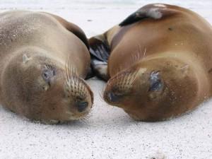 peru-vakantie-zeehonden