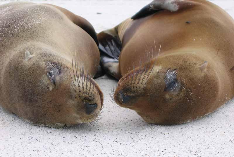 Peru vakantie zeehonden