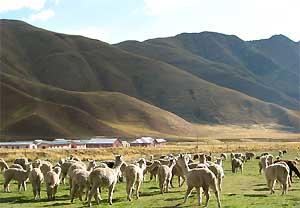Sisicuani Vallei - Peru en Bolivia reis