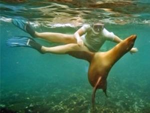 Galapagos eilanden - zeeleeuw