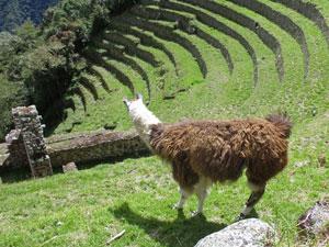 Winaywayna - Inca Trail