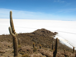 Cactuseiland zoutvlakte Bolivia