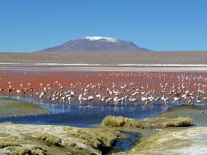 Flamingo's en Vulkanen