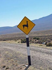 zuid-amerika-reis-maanvallei-lama-kl