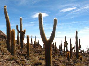 zuid-amerika-reis-zoutvlakte-cactus-kl