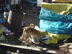 Gezondheid Peru straathond