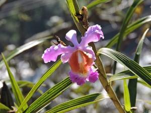 bloem reiziger peru