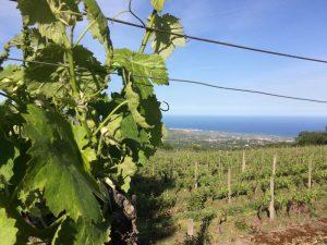 Italien Sizilien Aetna Auslug Weinprobe Weinreben
