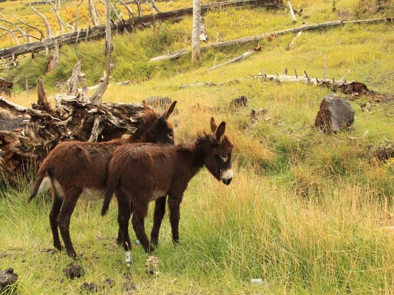 Sizilien Rundreise Ätna Esel
