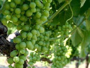 Insel Lipari Weinprobe Weingut