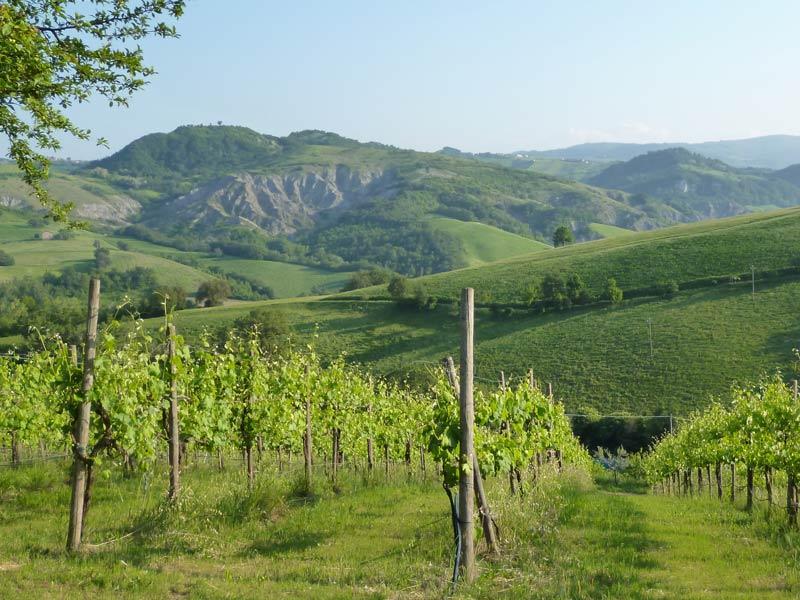 Kulinarische Reise Italien Emilia Romagna Weinberge