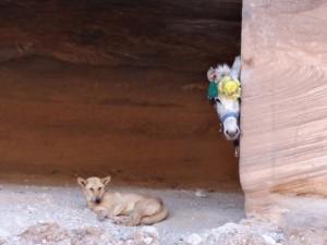 Ihre Reise durch Jordanien geht langsam zu Ende