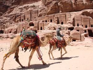 In Petra sind sowohl Kamele als auch Esel unterwegs