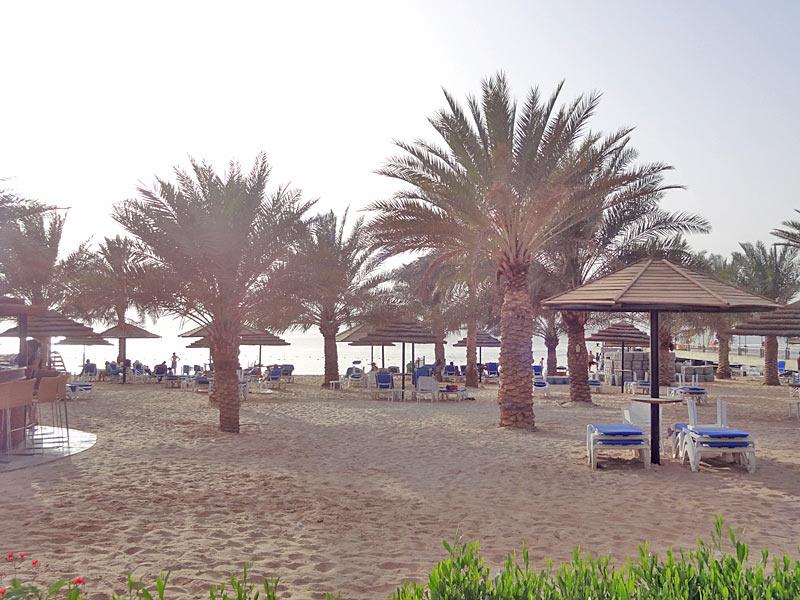 palmen am privaten strand von aqaba