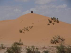 Kamel ganz oben auf großer Sanddüne