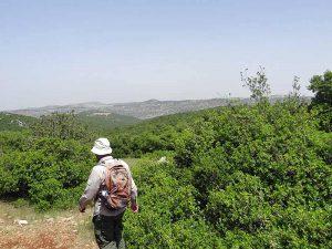 Jerash und Wanderung im Ajloun Reserve