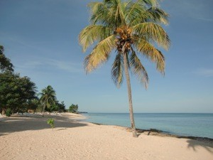 Palme am Strand der Playa Pesquero