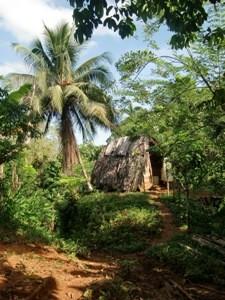 Hütte in der Umgebung von Baracoa