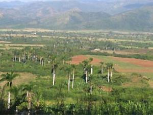 Landschaft mit Palmen nahe Camaguey