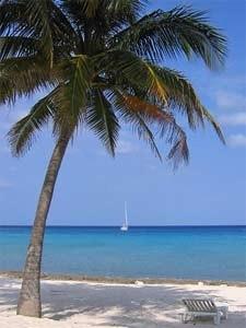 Palme vor Sandstrand