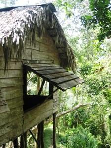 Hütte im Wald in Kuba