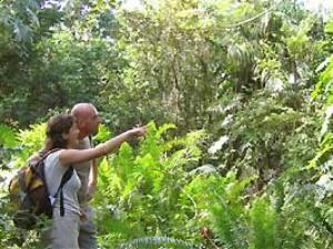 Paar im Nationalpark Sierra del Rosario in Las Terrazas