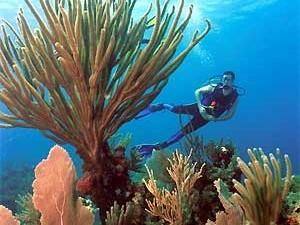 Kubanischer Korallenstrand