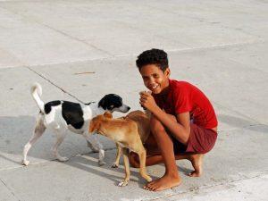Kubanischer Junge mit Hunden