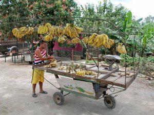 Bananenhändler Camaguey