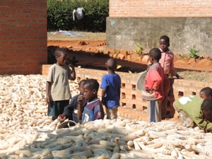 Kinder in einem Berg von Maiskolben