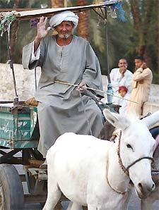 aegypten-eselwagen-transport