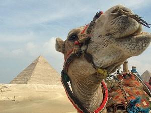 Medizinische Versorgung: Kamel vor Pyramide in Ägypten