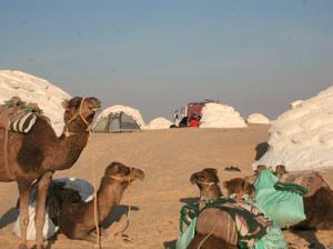 Lager und Kamele in der Weissen Wüste