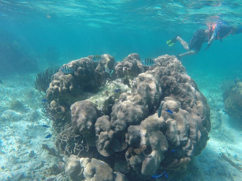 warum nach ägypten reisen Erkunden Sie die Unterwasserwelt.