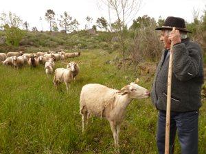 Schäfer mit seiner Herde