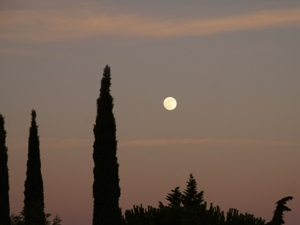 Zypressen vor Sonnenuntergang