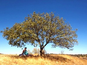 Hinterland Portugal: Landleben im Alentejo