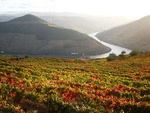 Ausblick auf das Douro Tal bei einer Mietwagenrundreise durch Portugal